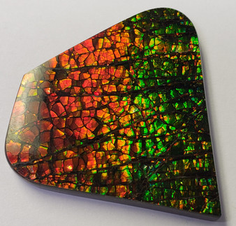 34x37 Ammolite Canada's Opal Natural Free Form 2 Color Green & Red Gem