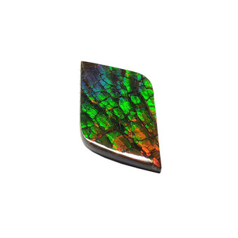 19x32 Ammolite Canada's Opal Rectangular Form 2 Color Green & Orange Gem