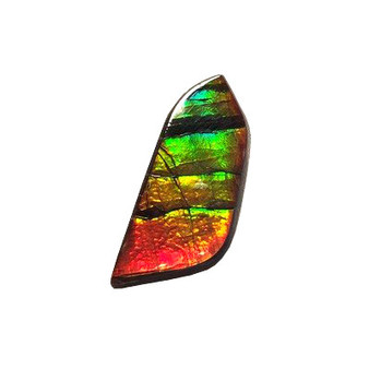 10x23 Ammolite Canada's Opal Natural Free Form 3 Color Green Gold Red Gem