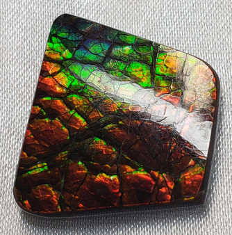 Free Form Square 22x20 Ammolite with Green and Red and Slight Hint of Royal Blue