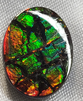 Free Form Oval 16x12 Ammolite with Green and Red.