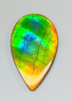 50 x 31 Three Color Natural Free Form Ammolite Gemstone