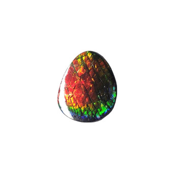 30x35 Ammolite Canada's Opal Natural Free Form 4 Color Red Green Blue & Gold Gemstone