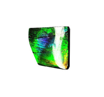 19x20 Ammolite Canada's Opal Natural Free Form 3 Color Purple Green & Gold Gemstone