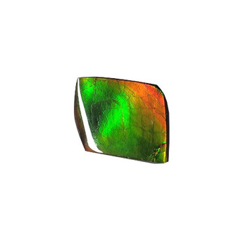 17x22 Ammolite Canada's Opal Natural Free Form 2 Color Green & Gold Gemstone