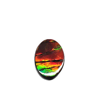 24x18 Ammolite Canada's Opal Oval Shape Triplet 3 Color Green Red & Gold Gemstone