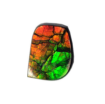 12x17 Ammolite Canada's Opal Natural Free Form 2 Color Green & Gold Gemstone