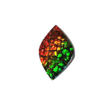 26x17 Ammolite Canada's Opal Natural Free Form 3 Color Green Gold & Red Gemstone
