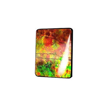 25x20 Ammolite Canada's Rectangular Form 2 Color Green & Red Gem