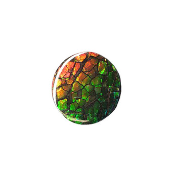 22x22 Ammolite Canada's Round Form 2 Color Green & Red Gem