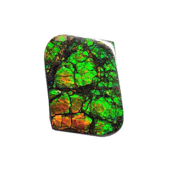 27x19 Ammolite Canada's Opal Natural Free Form 2 Color Green & Gold Gemstone