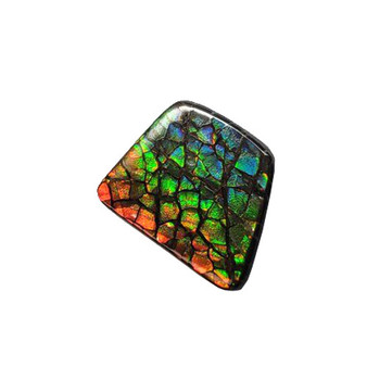 17x13 Ammolite Canada's Opal Natural Free Form 3 Color Orange Green & Gold Gemstone