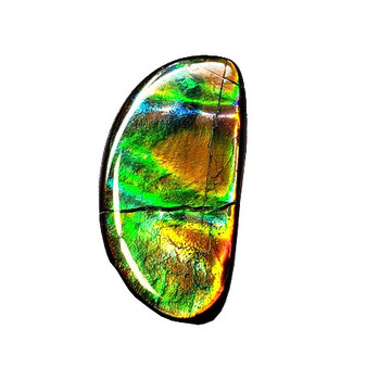 13x26 Ammolite Canada's Opal Natural Free Form 2 Color Green & Gold Gemstone
