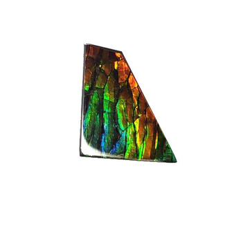 19x17 Ammolite Canada's Opal Natural Free Form 2 Color Green & Gold Gemstone