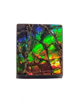 10x9 Ammolite Canada's Opal Square Shape Triplet 2 Color Gold & Blue Gemstone
