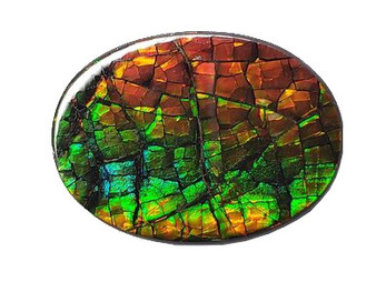 18x25 Ammolite Canada's Oval Form 2 Color Gold & Green Gem