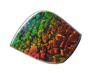 28x19 Ammolite Canada's Opal Natural Free Form Form 3 Color Gold Red & Green Gemstone