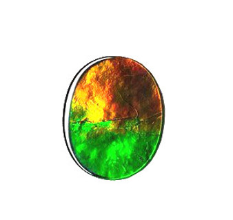 10x12 Ammolite Canada's Opal Oval Shape Triplet 3 Color Green Orange & Gold Gem