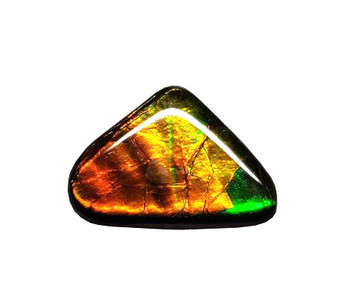 25x35 Ammolite Canada's Triangle Form 2 Color Green & Gold Gem