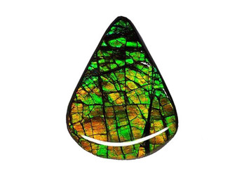 40x31 Ammolite Canada's Opal Free Form Shape Triplet 2 Color Gold & Green Gem