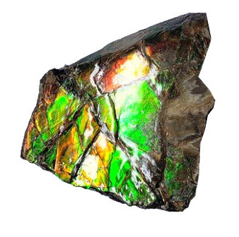 50x49 Ammolite Canada's Opal 2 Color Green & Gold Hand Specimens