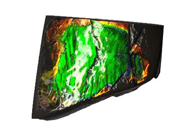 47x54 Ammolite Canada's Opal 2 Color Vibrant Green & Gold Hand Specimens