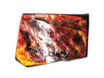 58x47 Ammolite Canada's Opal 2 Color Bright Red & Gold Hand Specimens