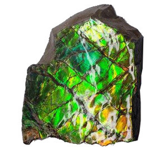 37x44 Ammolite Canada's Opal 2 Color Blue & Green Hand Specimens