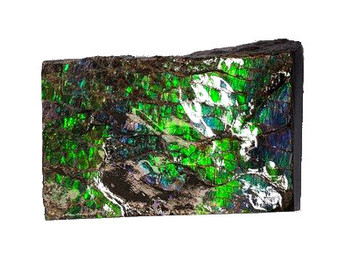 33x52 Ammolite Canada's Opal 2 Color Blue & Green Hand Specimens