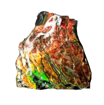 41x38 Ammolite Canada's 3 Color Red Green & Gold Hand Specimens