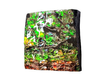 40x38 Ammolite Canada's Opal Square Shape 3 Color Red Green & Gold Hand Specimens