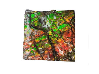 40x40 Ammolite Canada's Opal Square Shape 3 Color Green Red & Gold Hand Specimens