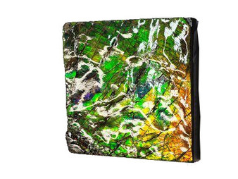 39x38 Ammolite Canada's Opal 2 Color Green & Gold Hand Specimens
