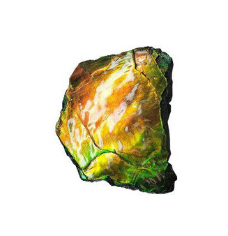 45x46 Ammolite Canada's Opal Hand Specimens 2 Color Green & Gold