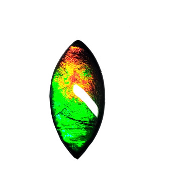 16x7 Ammolite Canada's Opal Marquis Form 3 Color Bright Gold Red & Green Gem