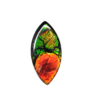 13x6 Ammolite Canada's Opal Marquise Form 3 Color Bright Gold Red & Green Gem 338