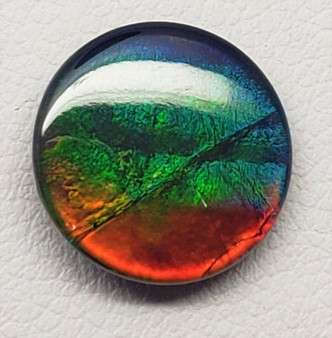 12mm Round Ammolite Triplet Deep Blue, Green and Red