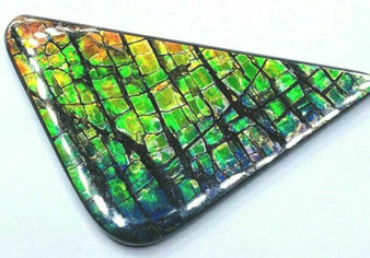 "Ammolite ""Canada's Opal"" 35x20mm Free Form Multi Color Gem Stained Glass #97"