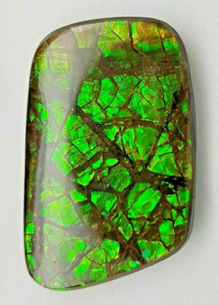 "Ammolite ""Canada's Opal"" Natural Free Form 22x35mm Green Gem #273"