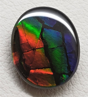 9 x 11 Ammolite Canada's Opal Oval Dragon Skin Deep Green, Red and Blue