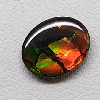 8 x 10 Ammolite Canada's Opal Oval Dragon Skin Deep Green hints of Red & Yellow