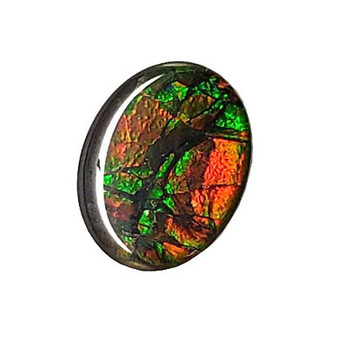 8 x 10 Ammolite Canada's Opal Oval Dragon Skin Deep Green hints of Red