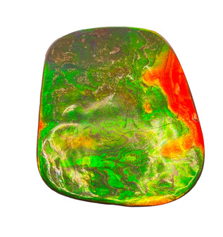 50x62 Ammolite Double Sided Free Form Brilliant Orange and Green