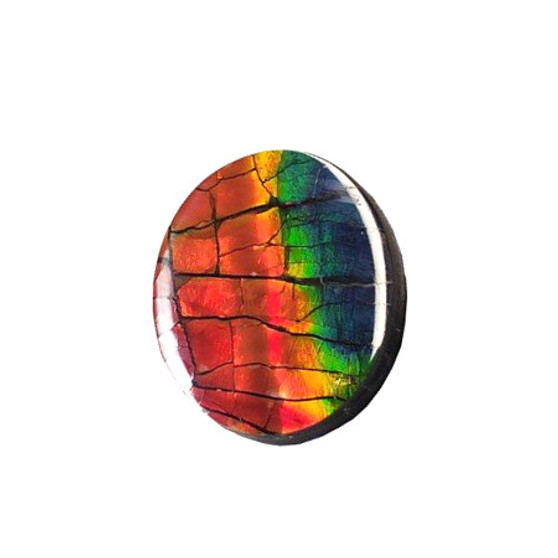 30x25 Ammolite Canada's Opal Natural Oval Shape Triplet 4 Color Red Green Gold Blue Gemstone