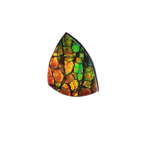 Free Form Natural 19x15 Ammolite Red and Green.
