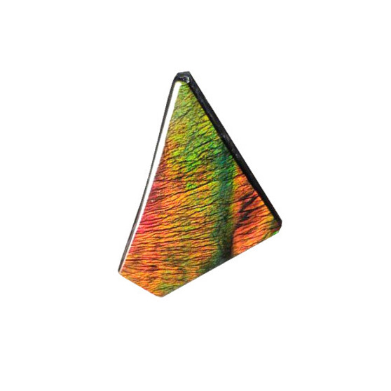Free Form Triangle 31x19 Ammolite With Deep Red and Hints Green and Blue.