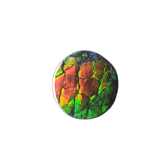 26x26 Ammolite Canada's Opal Round Shape Triplet 3 Color Gold Green & Red Gemstone