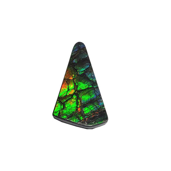 34x19 Ammolite Canada's Opal Natural Free Form 3 Color Blue Green & Gold Gemstone