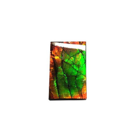 18x11 Ammolite Canada's Opal Rectangular Form 3 Color Gold Green & Red Gemstone