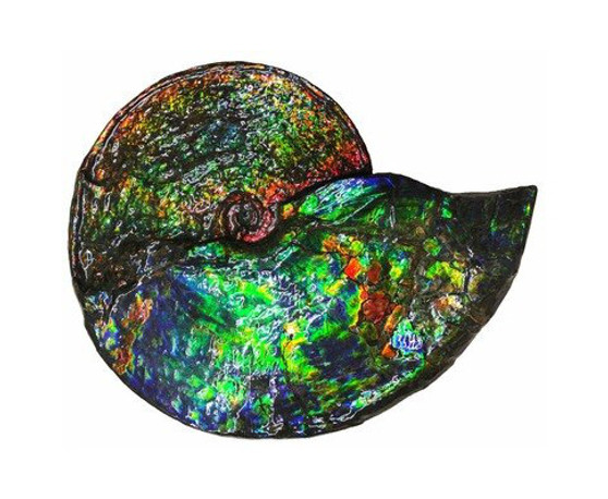 Beautiful Bright Mined Ammonite Bright Reds, Oranges, Golds, Greens, and Blues